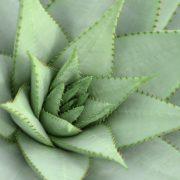 plant 2388901 1920